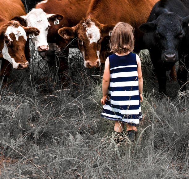 little girl faces cows-2