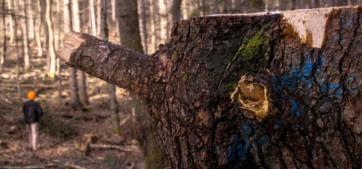 stump shot blue.jpg