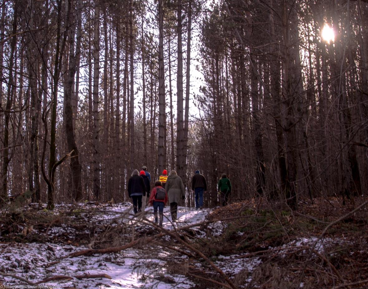 walking on trail town forrest.jpg